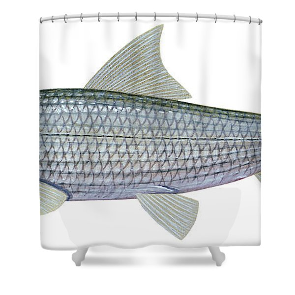 Illustration Of A Bonefish Albula Shower Curtain by Carlyn Iverson