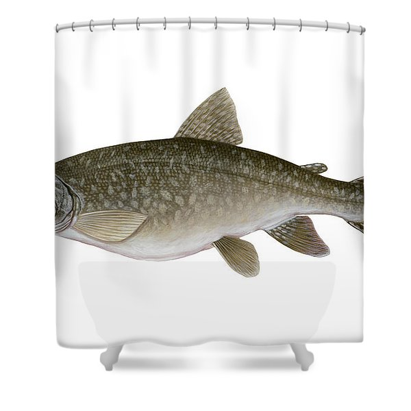 Illustration Of A Lake Trout Salvelinus Shower Curtain by Carlyn Iverson