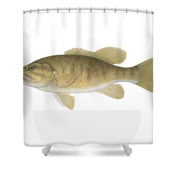Illustration Of A Smallmouth Bass Shower Curtain by Carlyn Iverson