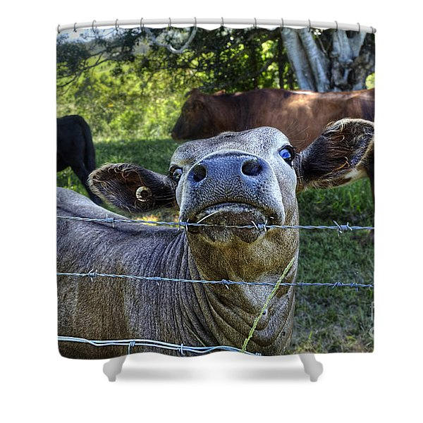I'm all Ears Shower Curtain by Kaye Menner