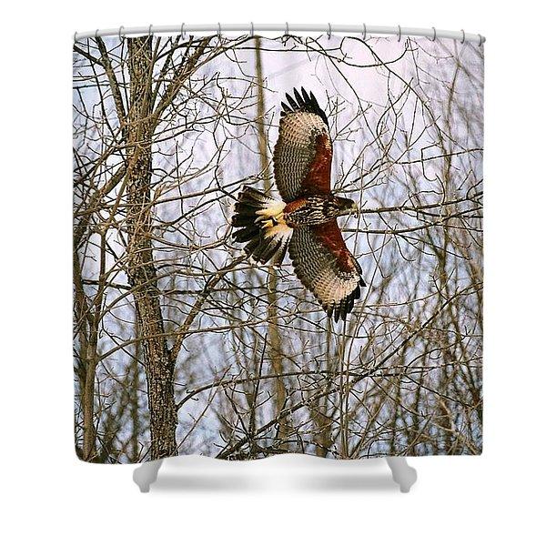 In Flight Shower Curtain by David Porteus