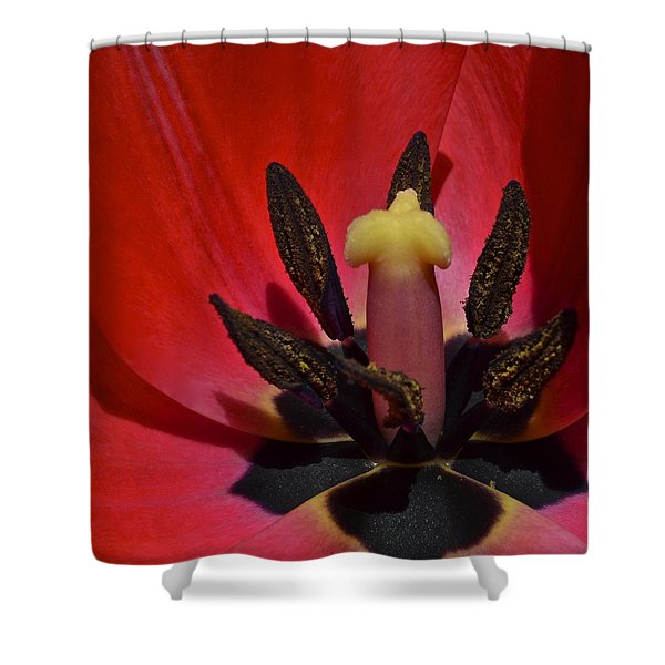 In The Corner Shower Curtain by Frozen in Time Fine Art Photography