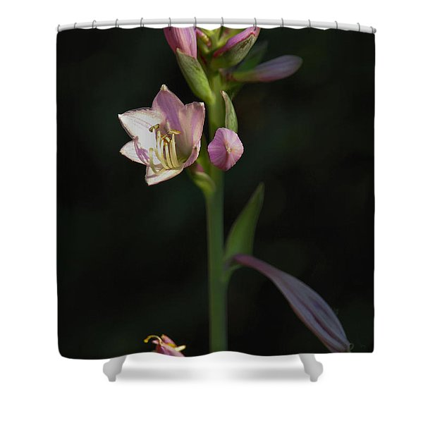 In The Shadows Of A Warm Summer Evening Shower Curtain by Rory Sagner