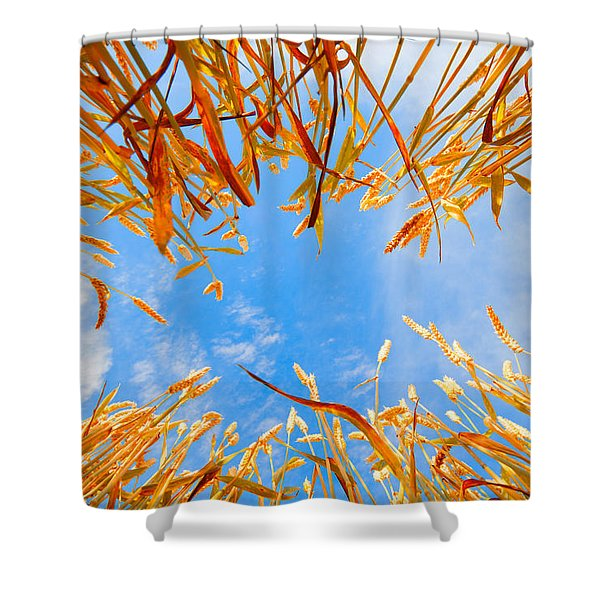 In the wheat Shower Curtain by Alexey Stiop
