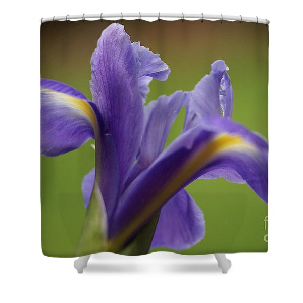 Iris 3 Shower Curtain by Carol Lynch