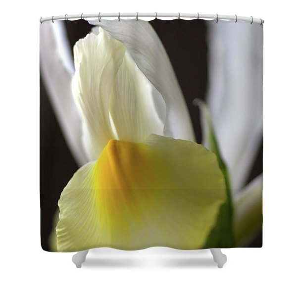 Iris Flower Shower Curtain by Joy Watson