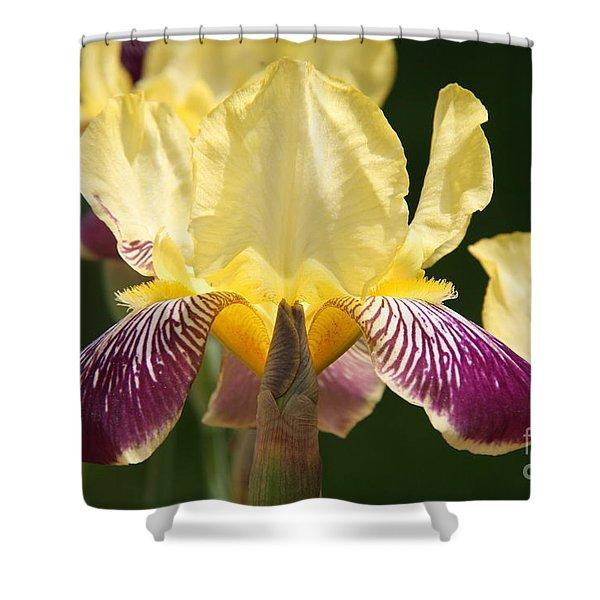 Iris Shower Curtain by Jolanta Anna Karolska