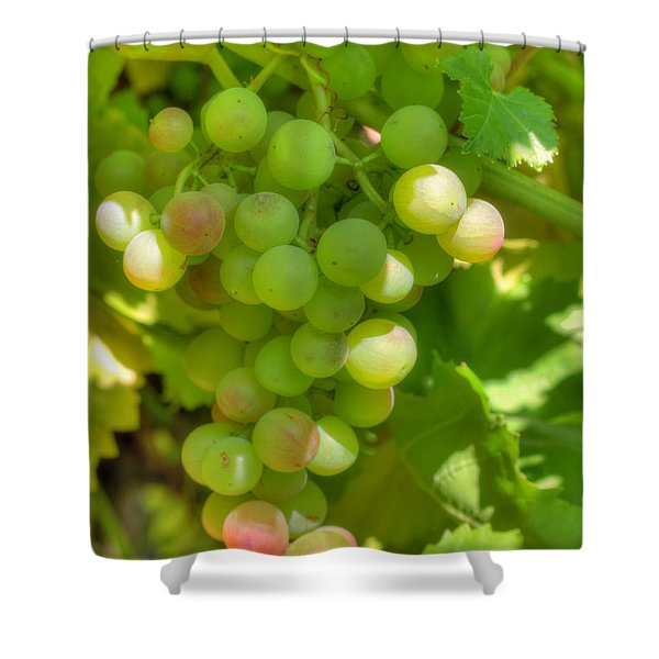 Just A Little More Time On The Vine Shower Curtain by Heidi Smith
