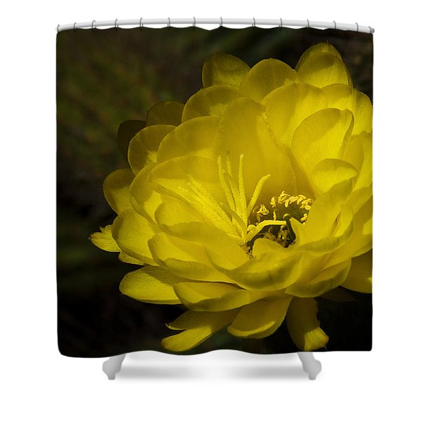 Just Call Me Mellow Yellow Shower Curtain by Saija  Lehtonen