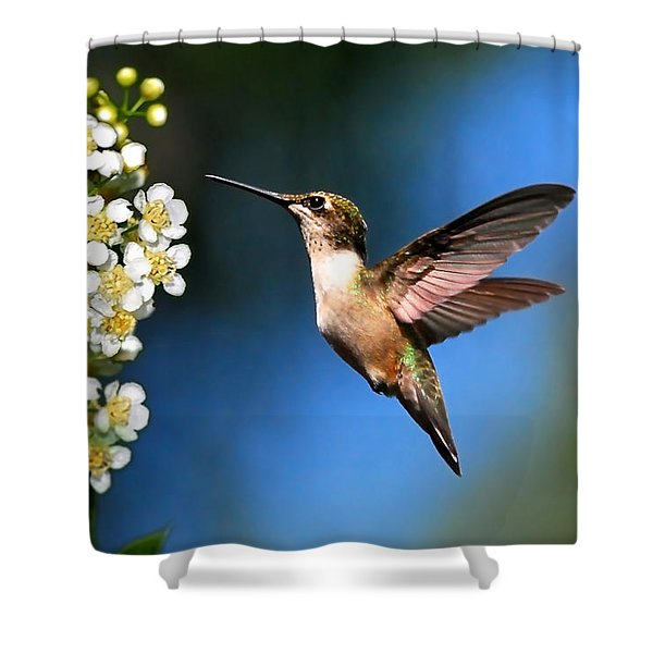 Just Looking Shower Curtain by Christina Rollo