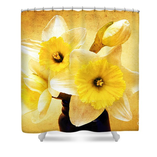 Just Plain Daffy 1 - Flora - Spring - Daffodil - Narcissus - Jonquil Shower Curtain by Andee Design