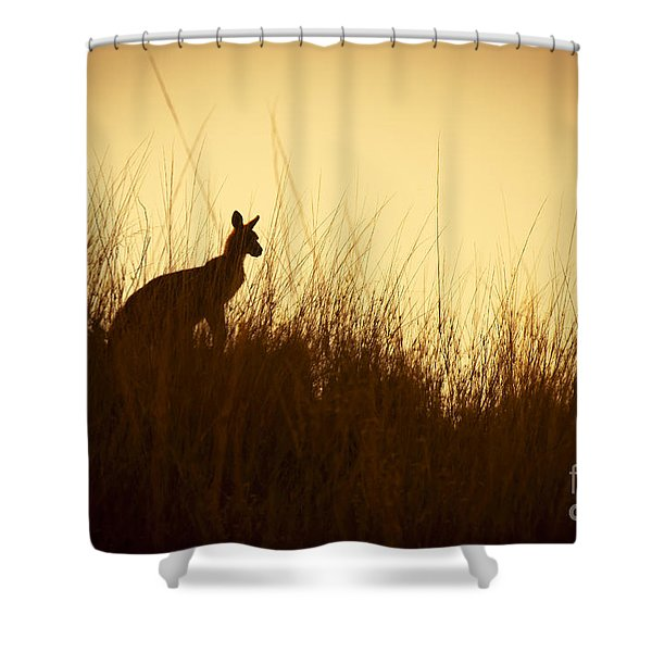 Kangaroo Silhouettes Shower Curtain by Tim Hester