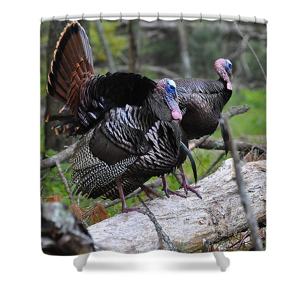 King of Spring Shower Curtain by Todd Hostetter