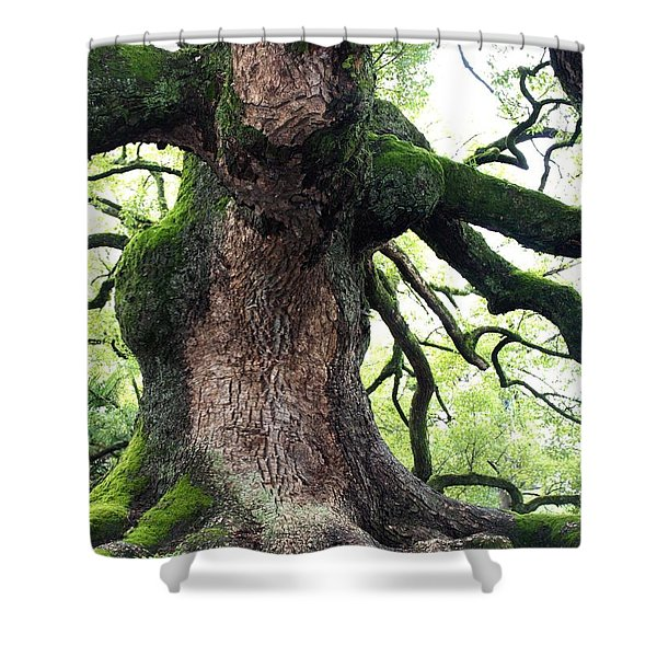 Kyoto Temple Tree Shower Curtain by Carol Groenen