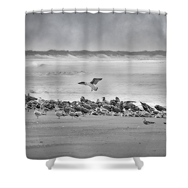Landing In A Blur Shower Curtain by Betsy C  Knapp