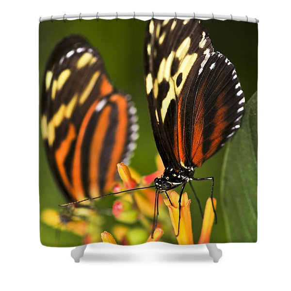 Large Tiger Butterflies Shower Curtain by Elena Elisseeva