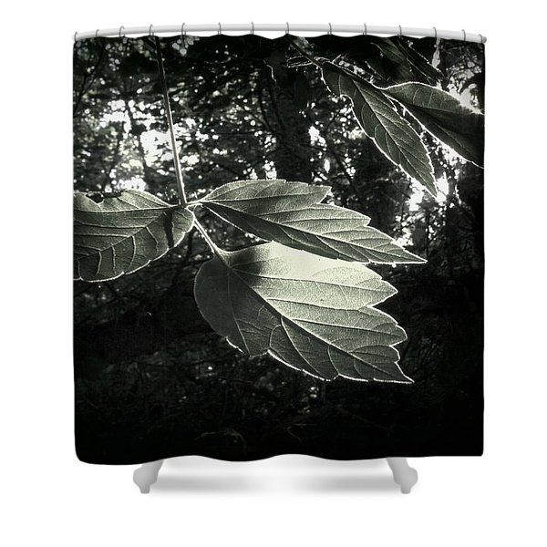 Last Rays II Shower Curtain by Jessica Myscofski