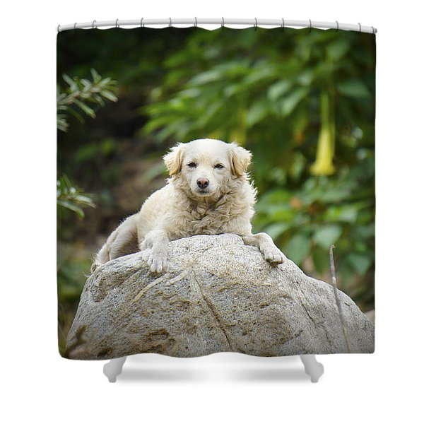 Lazy Dog Shower Curtain by Aged Pixel