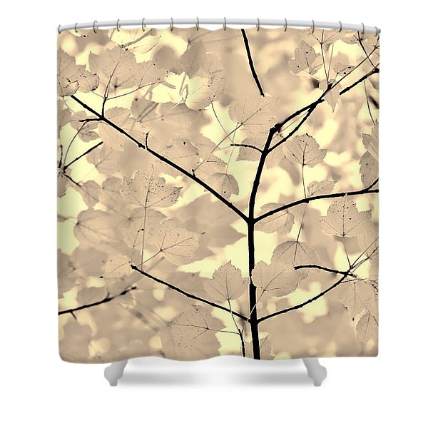 Leaves Fade to Beige Melody Shower Curtain by Jennie Marie Schell