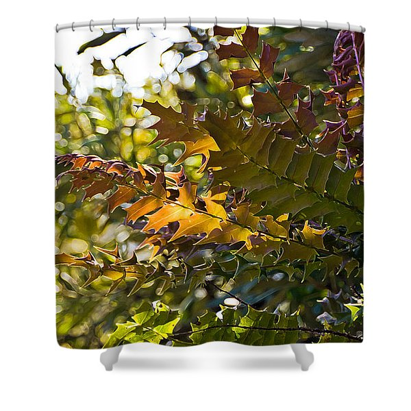 Leaves Shower Curtain by Kate Brown