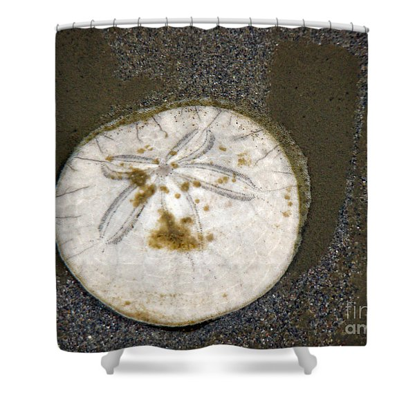 Legend Of The Sand Dollar Shower Curtain by Beverly Guilliams