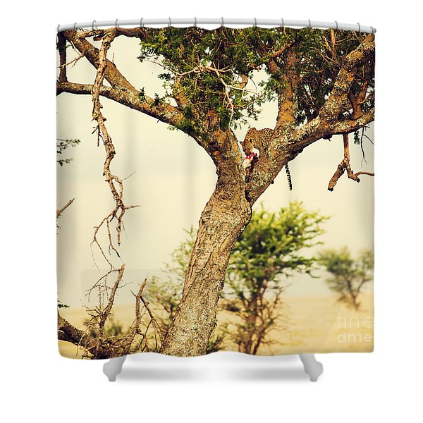 Leopard Eating His Victim On A Tree In Tanzania Shower Curtain by Michal Bednarek