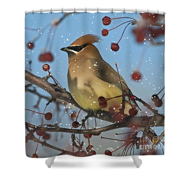 Let it snow Let it snow Let it... Shower Curtain by Nina Stavlund