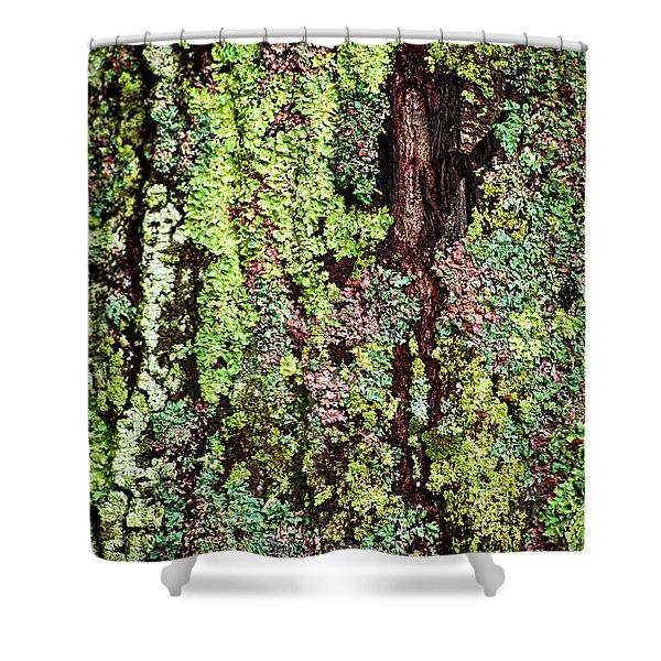 Lichen Shower Curtain by Elena Elisseeva