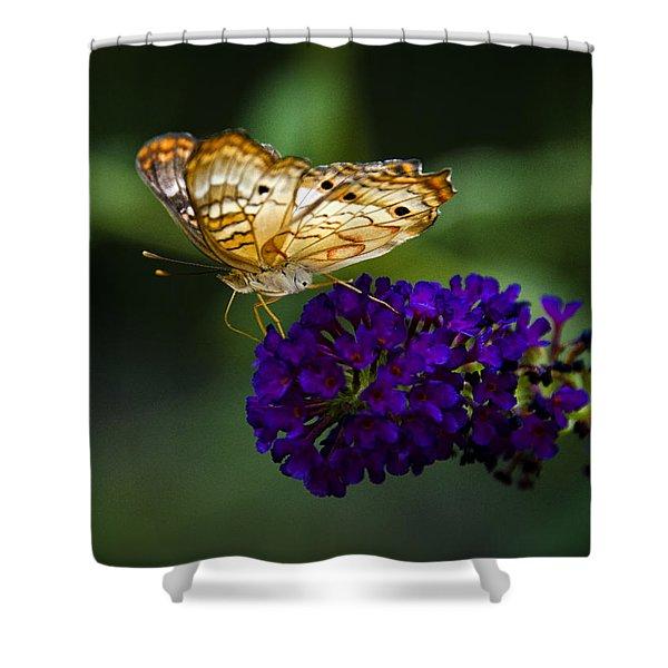 Light Beneath My Wings Shower Curtain by Saija  Lehtonen