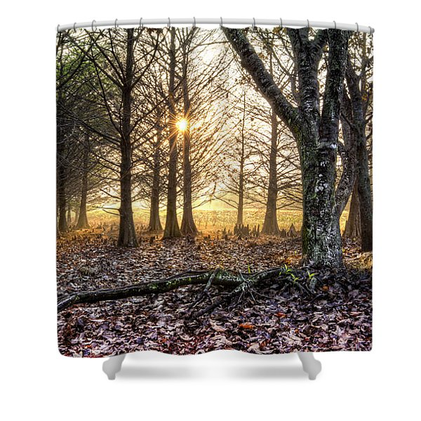Light in the Trees Shower Curtain by Debra and Dave Vanderlaan