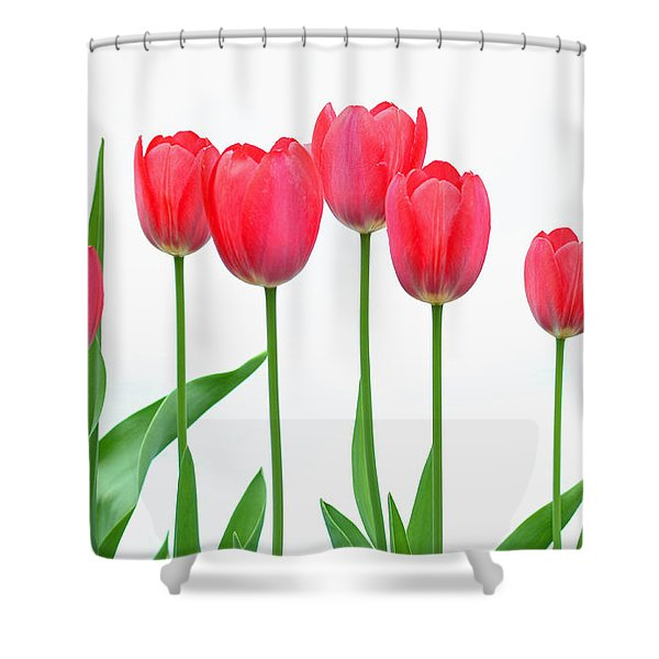 Line Of Tulips Shower Curtain by Steve Augustin
