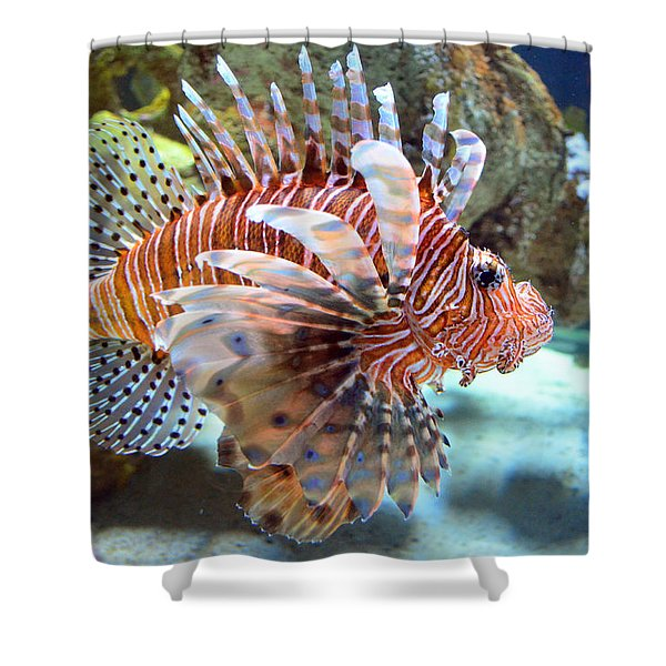 Lionfish Shower Curtain by Sandi OReilly