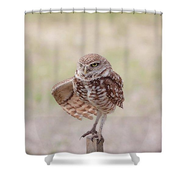 Little One Shower Curtain by Kim Hojnacki