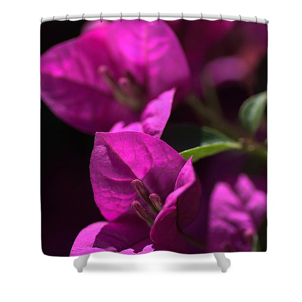 Living With Bougainvillea Shower Curtain by Joy Watson