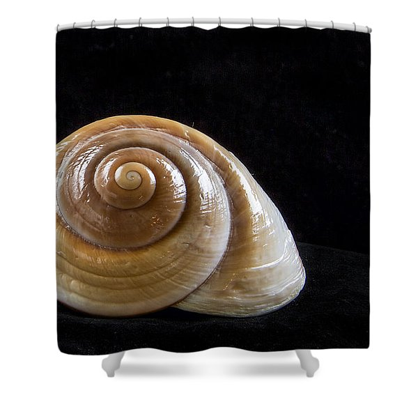 Lone Shell Shower Curtain by Jean Noren