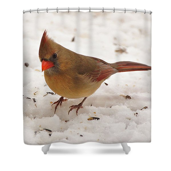 Look at You Shower Curtain by Sandy Keeton