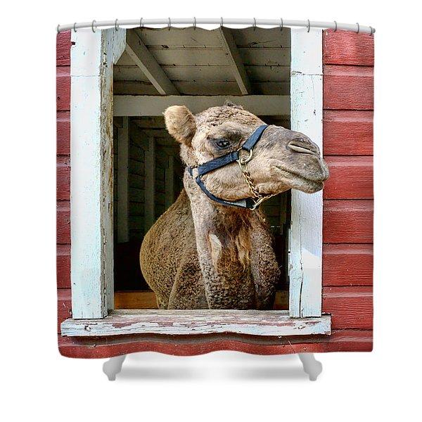 Look Left Shower Curtain by Nikolyn McDonald