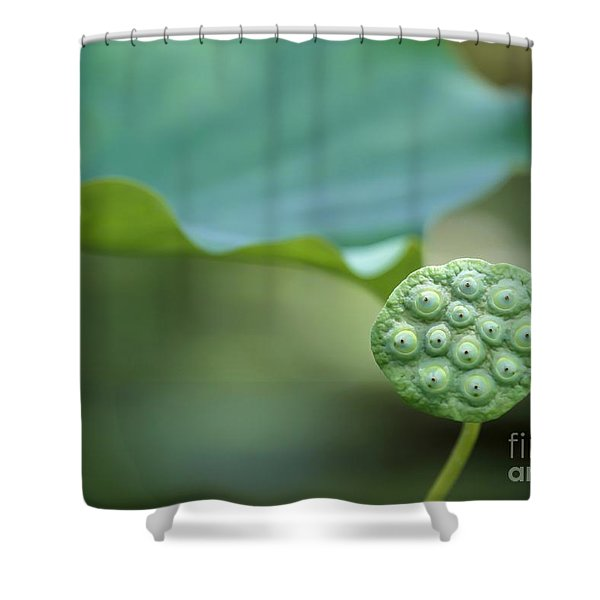 Lotus Leaf And A Seed Pod Shower Curtain by Sabrina L Ryan