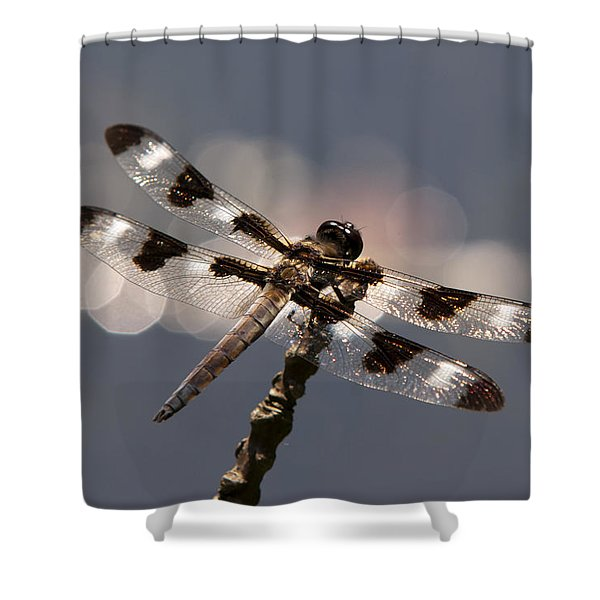 Luminous Dragonfly Shower Curtain by Christina Rollo