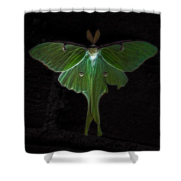 Lunar Moth Shower Curtain by Bob Orsillo