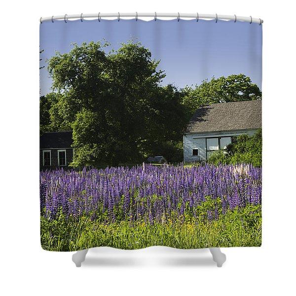 Lupine Flowers Near Round Pond Maine Shower Curtain by Keith Webber Jr