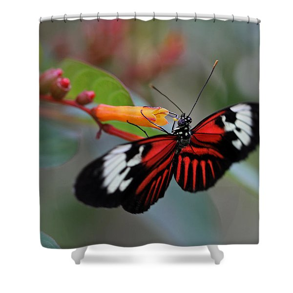 Madiera Butterfly Shower Curtain by Juergen Roth