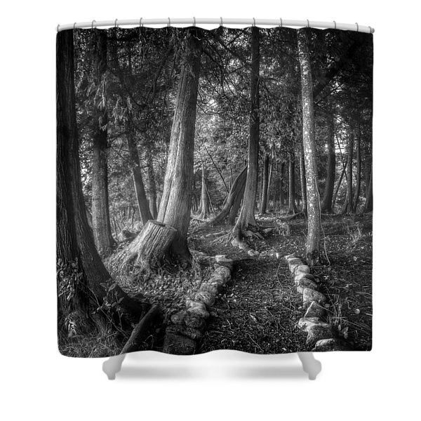 Magical Forest 2 Shower Curtain by Scott Norris