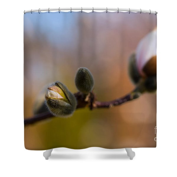 Magnolia Season II Shower Curtain by Mary  Smyth