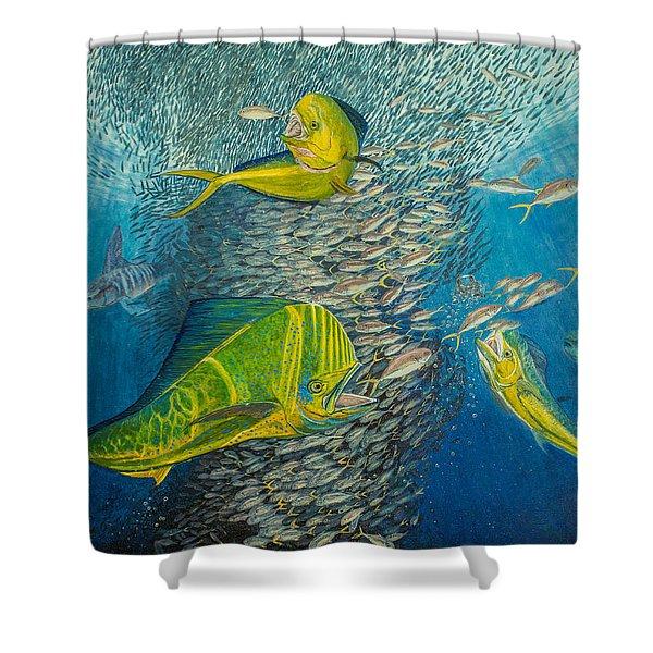 Mahi Mahi original oil painting 24x30in Shower Curtain by Manuel Lopez