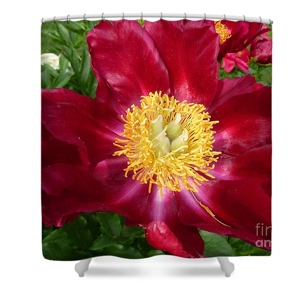 Mahogany Peony Shower Curtain by Lingfai Leung