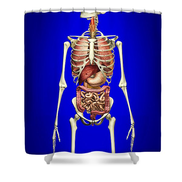 Male Skeleton With Internal Organs Shower Curtain by Leonello Calvetti