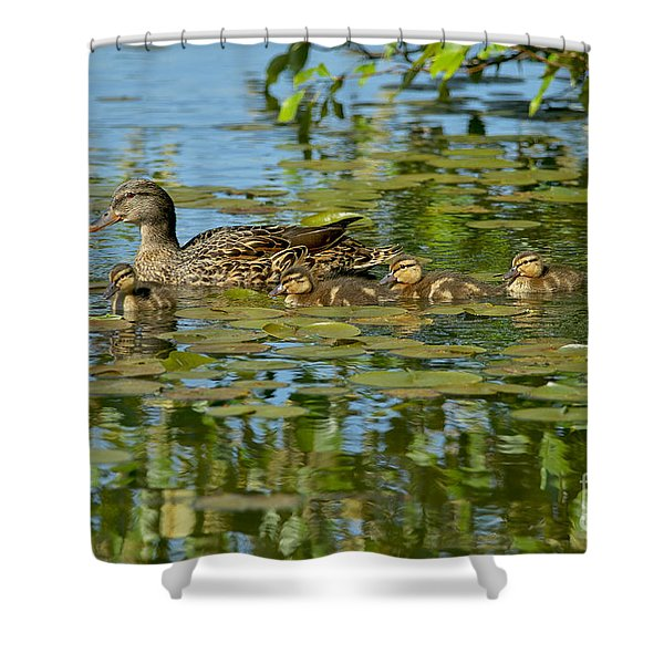 Mallard Mom and the Kids Shower Curtain by Sharon  Talson