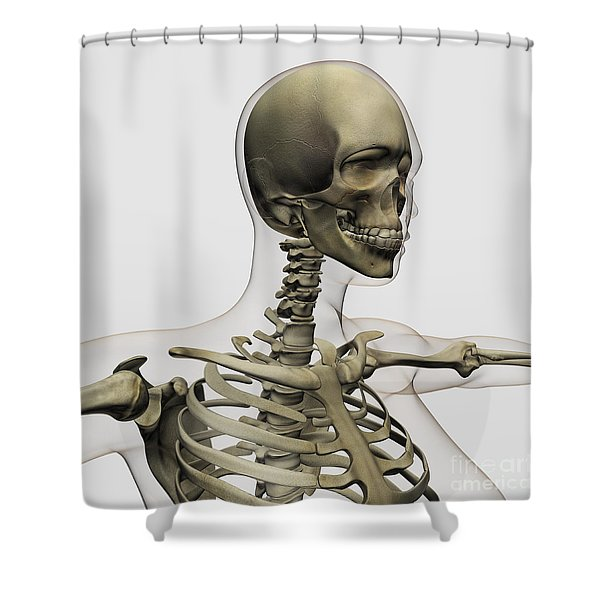 Medical Illustration Of A Womans Skull Shower Curtain by Stocktrek Images
