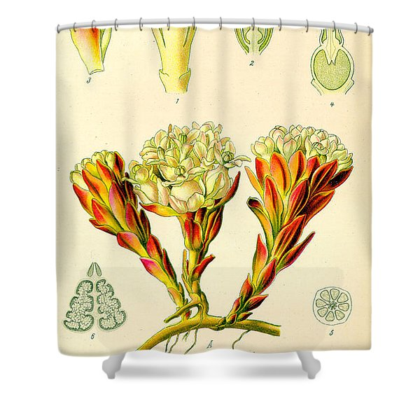 Melera Shower Curtain by Nomad Art And  Design